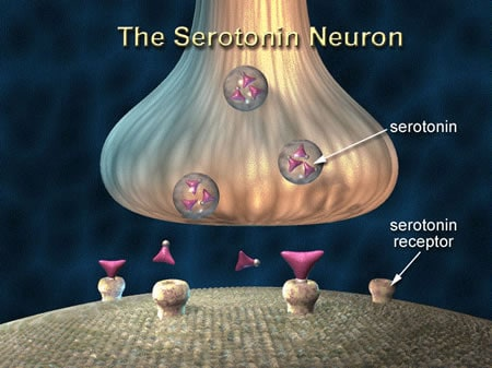 Serotonin fact about relationship