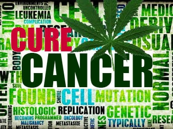 cure-cancer-weed