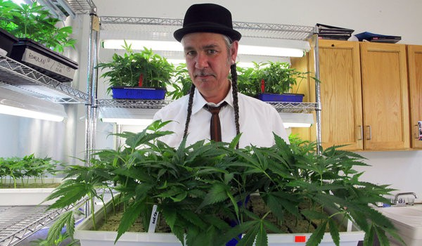 prevailing marijuana