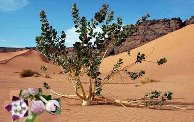 life in sahara desert