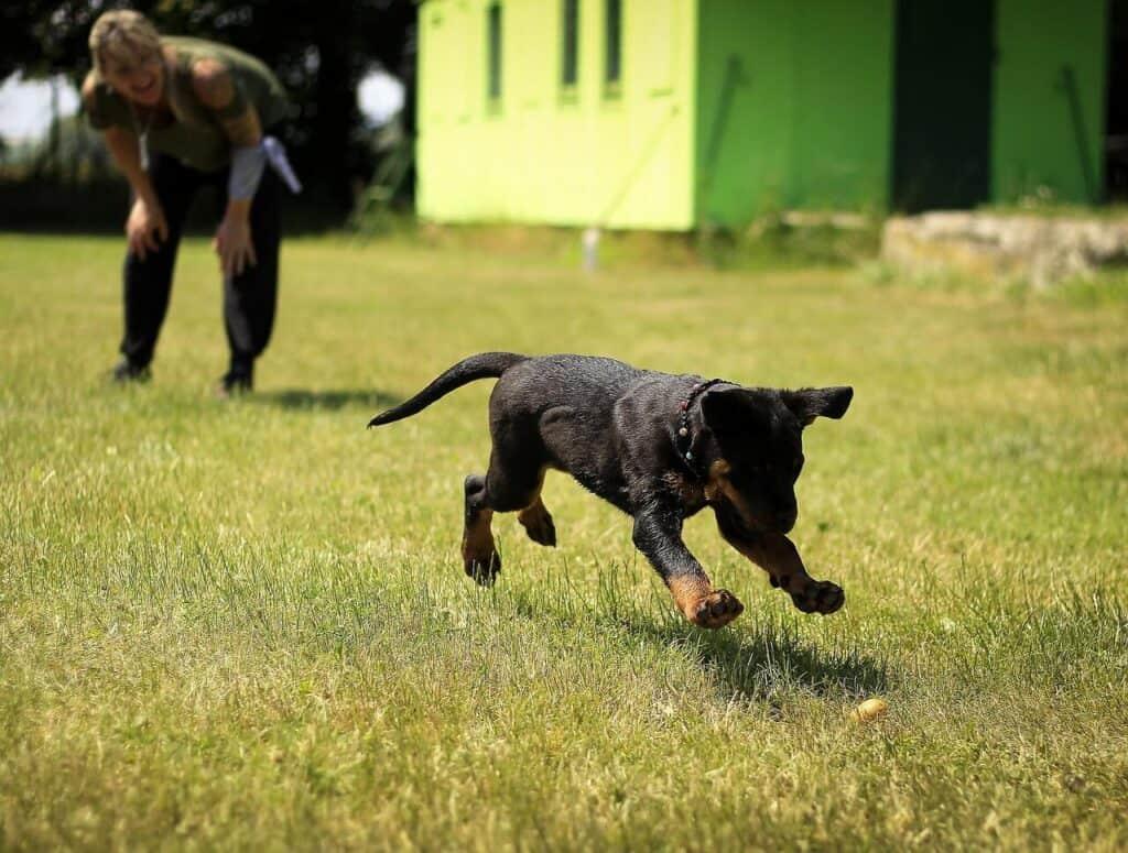 Outdoor Activities For Your Rottweiler