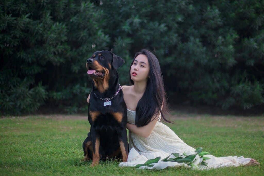 Best ways to teach Rottweiler to speak