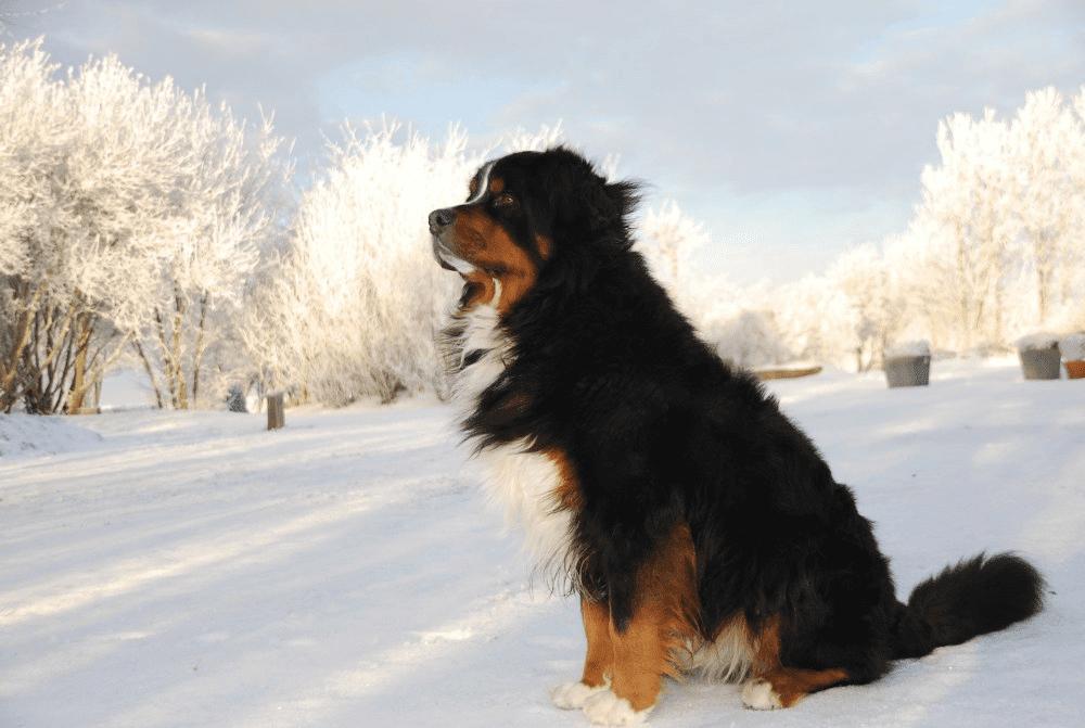 7 Most Beautiful Dog Breeds