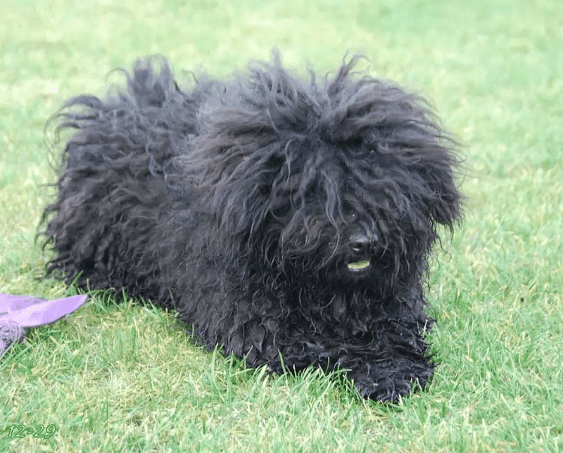 Best Guard Dogs breed