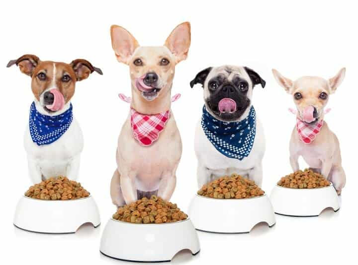 5 Reasons Why Your Dog Not Eating And Appetite Solutions