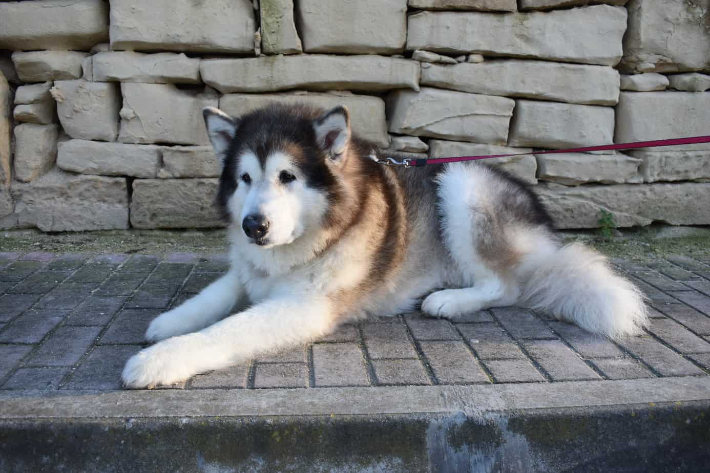 Large dogs with a long life expectancy
