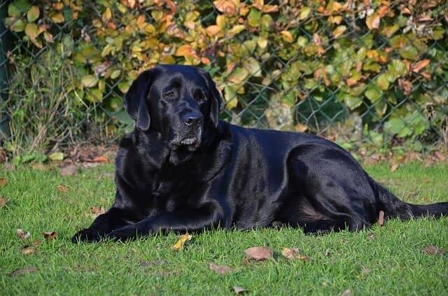 10 Smartest dog breeds