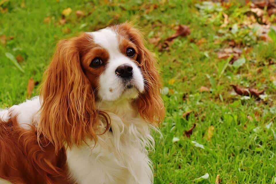 Top 10 Family Friendly Dog Breeds