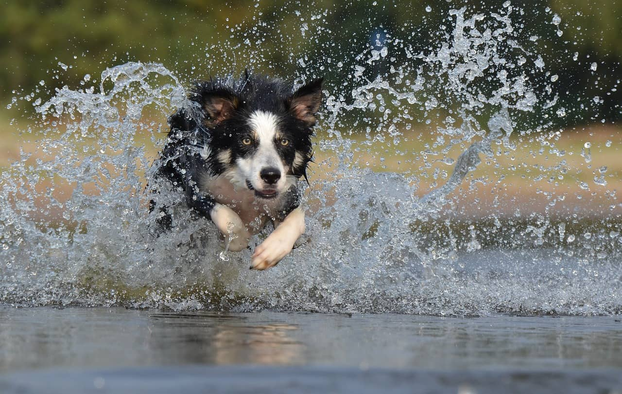 Some dog breeds that are easy to train