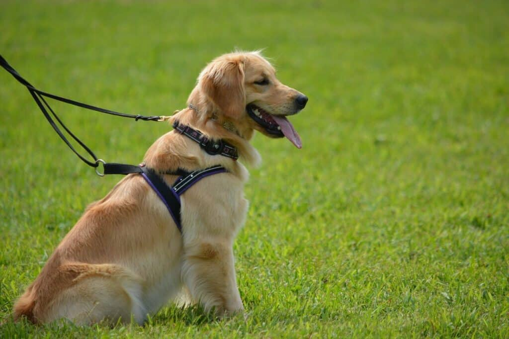 The Best Dog Breeds For Runners