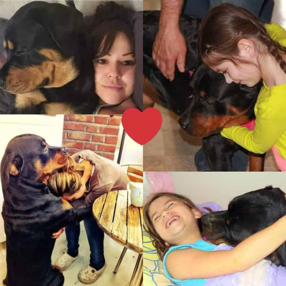 3 Ways Rottweiler Say I love you