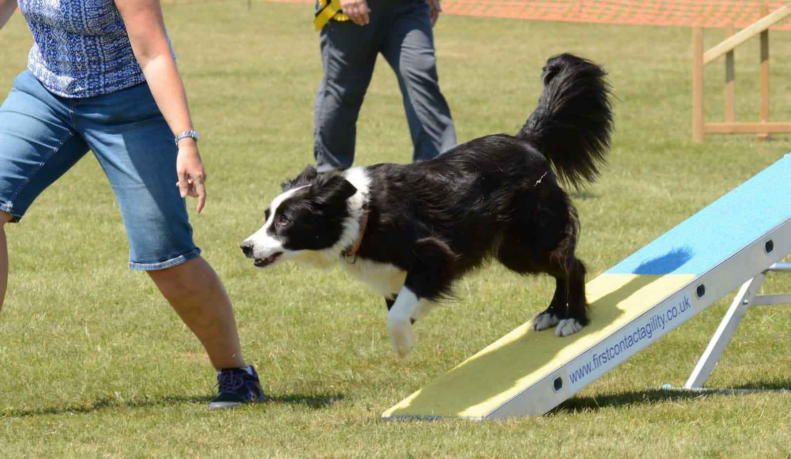 Exercises For Your Dog