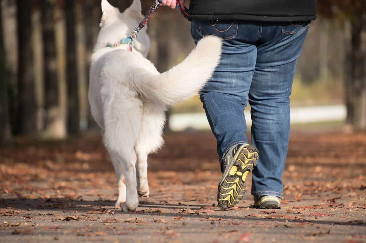 The Importance Of Walking Your Dog
