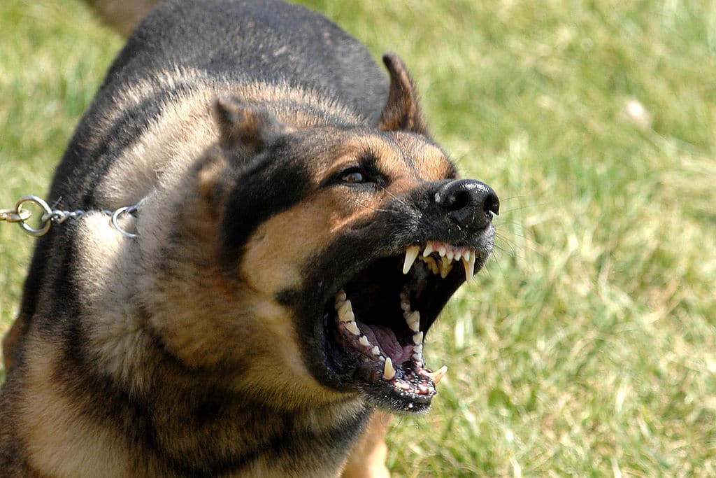 Dealing With Excessive Dog Barking
