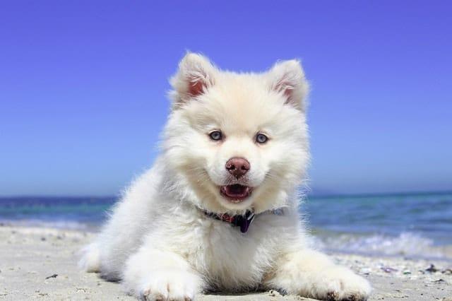 Best trendy dog names