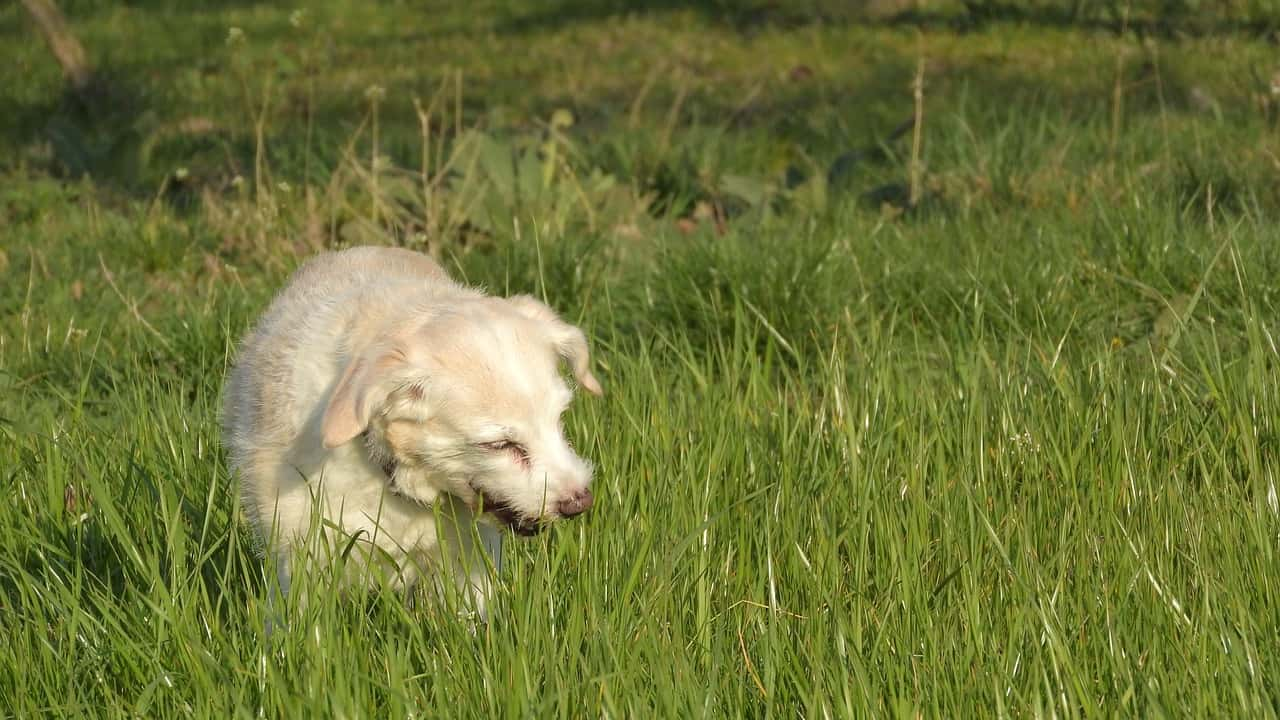 Dog Myths And Misconceptions: Look At The Facts