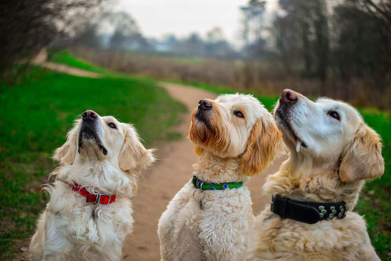 10 Brain Games For Dogs