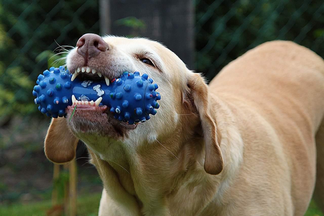 Dog oral care