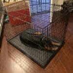 Crate Training Your Rottweiler Puppy