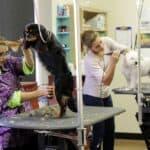 Dog Grooming Tips