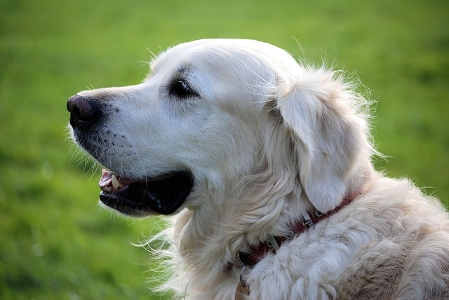 Cool Dog Names With Meanings