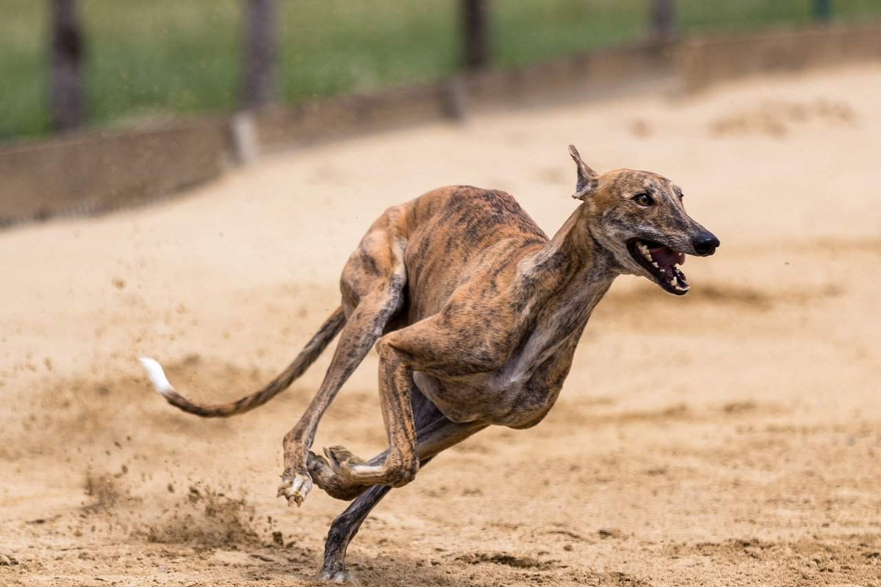 15 amazing facts about dogs