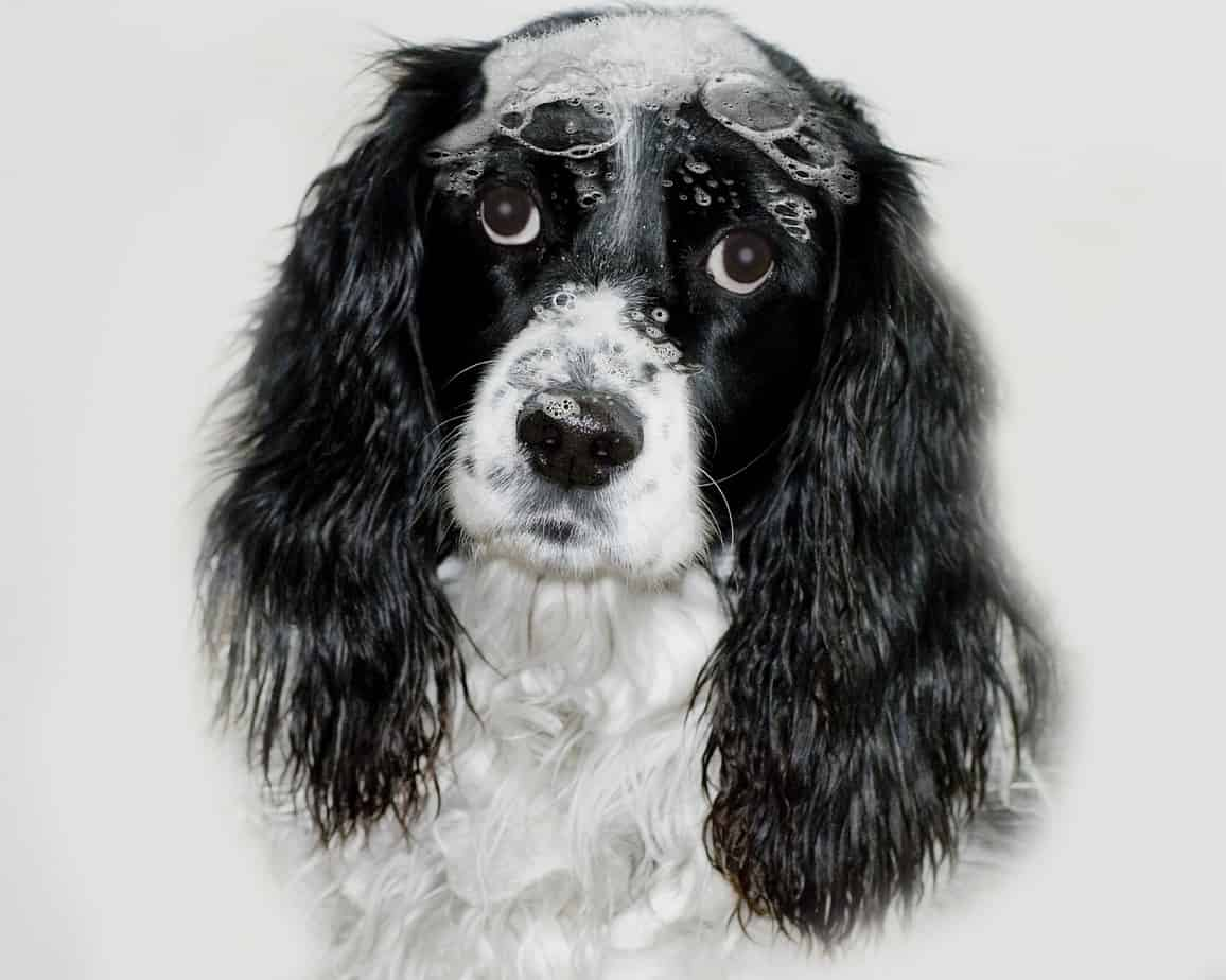 5 Dog Grooming Tips To Keep Them Looking Awesome